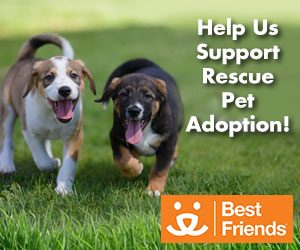 Cleaning For The Paws – Supporting Rescue Pet Adoption